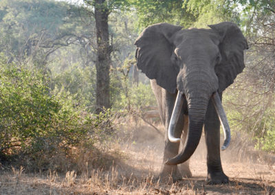 Zimbabwean Safari, 2016
