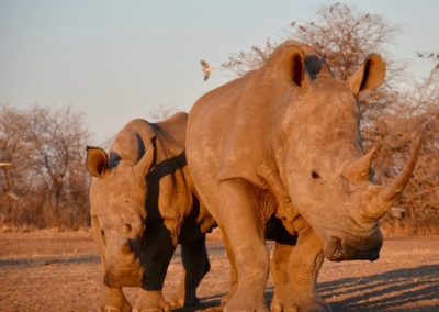 African Safari, 2010